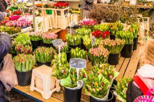 Samen voor De Bilt organiseert Paasactie met een bloemetje voor bewoners van Biltse zorginstellingen (Foto: © Joyce Reimus - HLP Images)